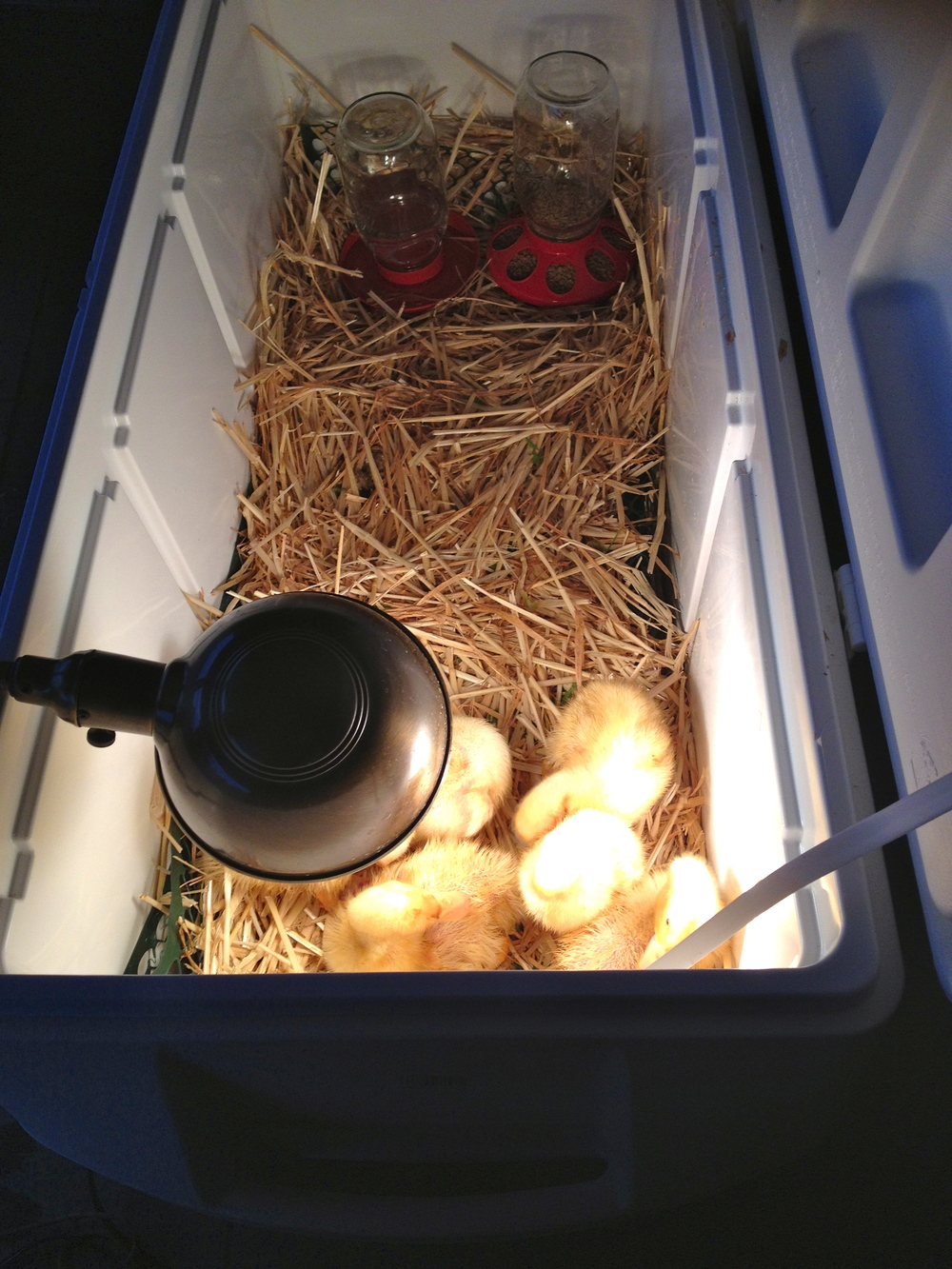 At night with their heat lamp.