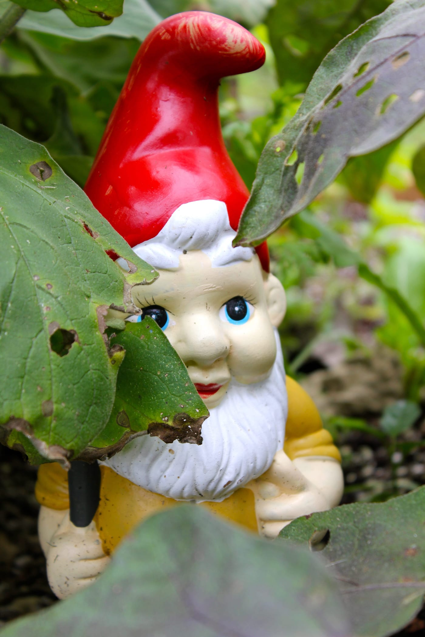 Sunshower-Farms-About-The-Farm-Gnome-Collection-Hawaii.jpg