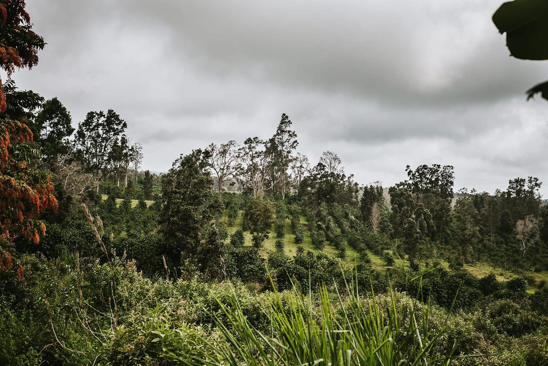 Sunshower-Coffee-Farm-Big-Island-Hawaii-Kona.jpg