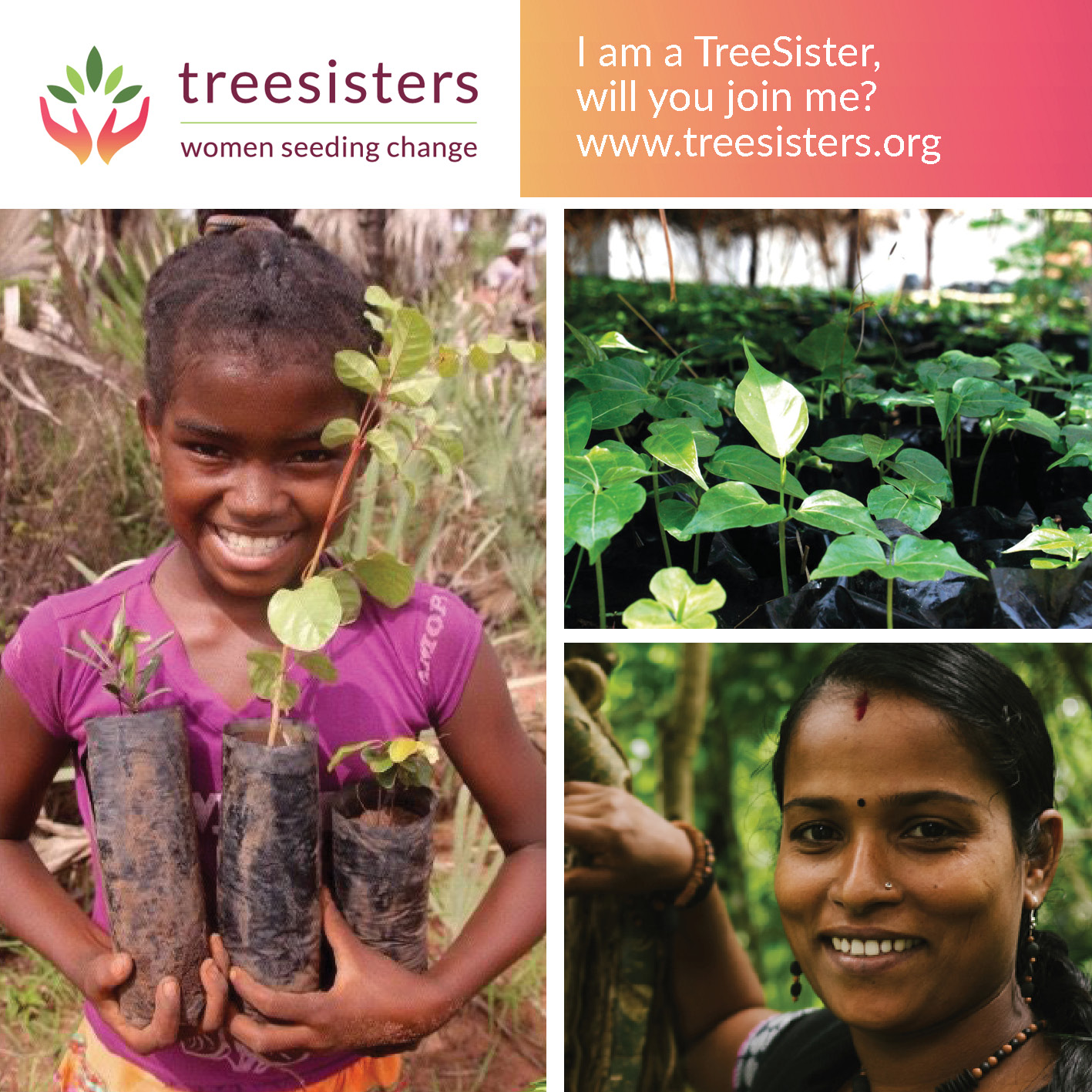 - Imagine a reforestation revolution ignited by the shared creativity and courage of a global network of millions of women.TreeSisters is a non-profit organisation aiming to radically accelerate tropical reforestation by engaging the unique feminine consciousness, gifts and leadership of women everywhere and focusing it towards global action.TreeSisters are planting over a million trees a year, and they are now calling for women to plant a billion trees a year, by becoming a treesister and contributing monthly to tropical reforestation. www.TreeSisters.org