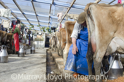 Dairyfarm_0102.jpg