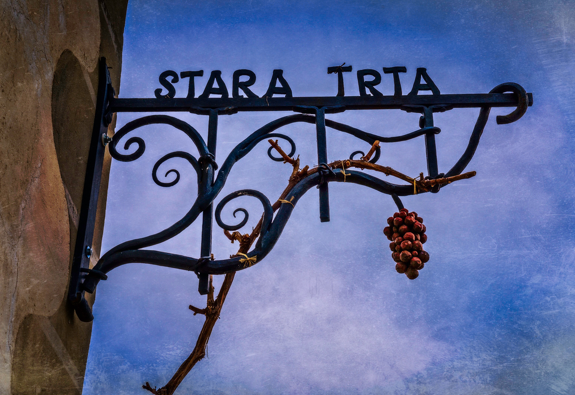 stara_trta_1.jpg