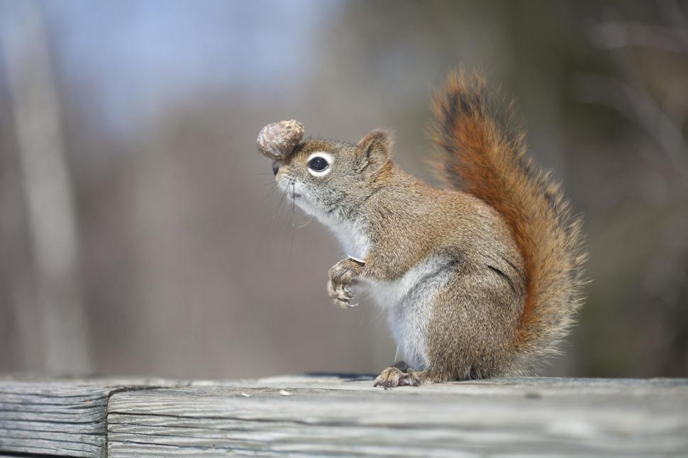 squirrel balance.jpg