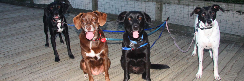 <dc dogs at Kingman Park>
