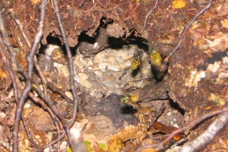 wasps-around-nest-entrance.jpg
