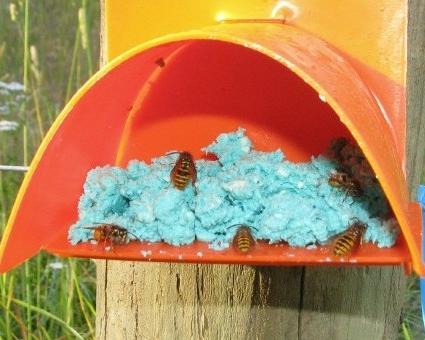wasps-in-bait-station.jpg