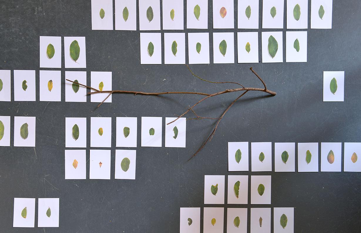 黄永生,《记住一棵树》 ,选自《刺眼的黑色》系列,2018年。  无酸纸艺术微喷,树枝,尺寸可变  图片由艺术家提供。