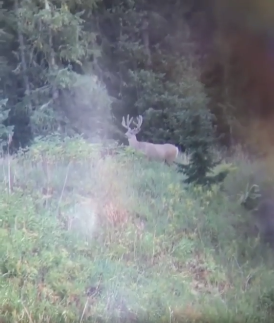 Trip Highlight #6:  Seeing mule deer literally everywhere. I can't recall seeing a mature mule deer in the past, and on this trip I saw two GIANTS (not referring to this guy) that I couldn't get on film. They were absolutely incredible.