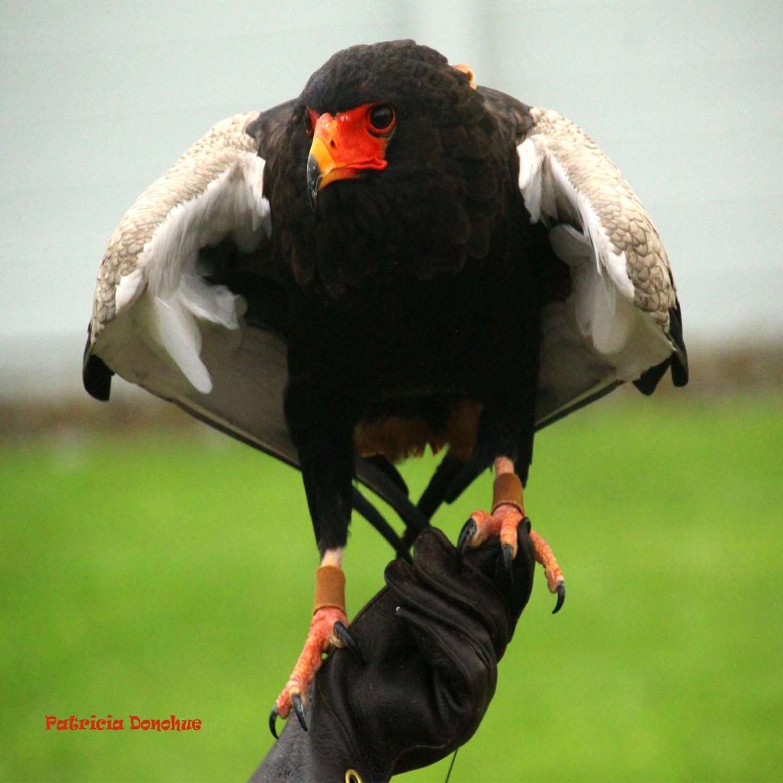 Bird on hand.jpg