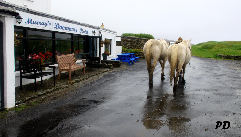 2 horses back.jpg