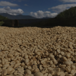 Our Coffee Farms