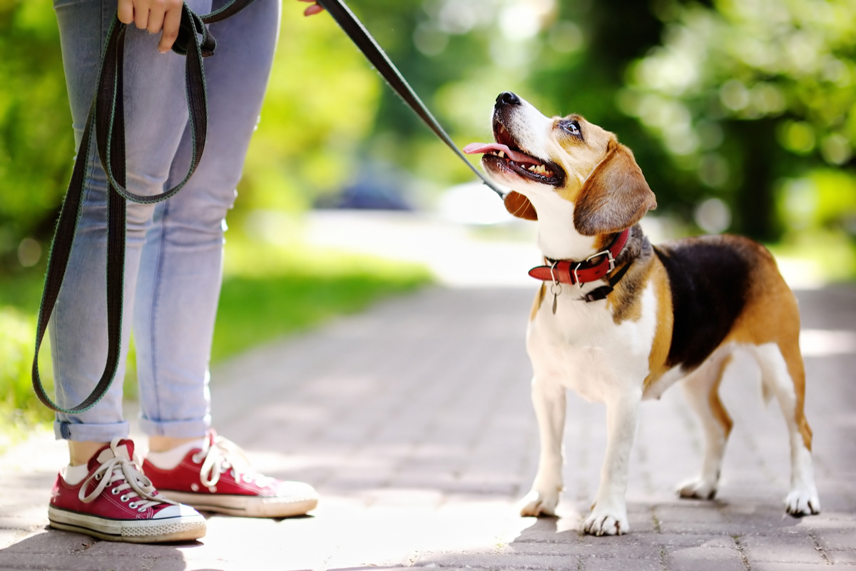 Obedience Training -