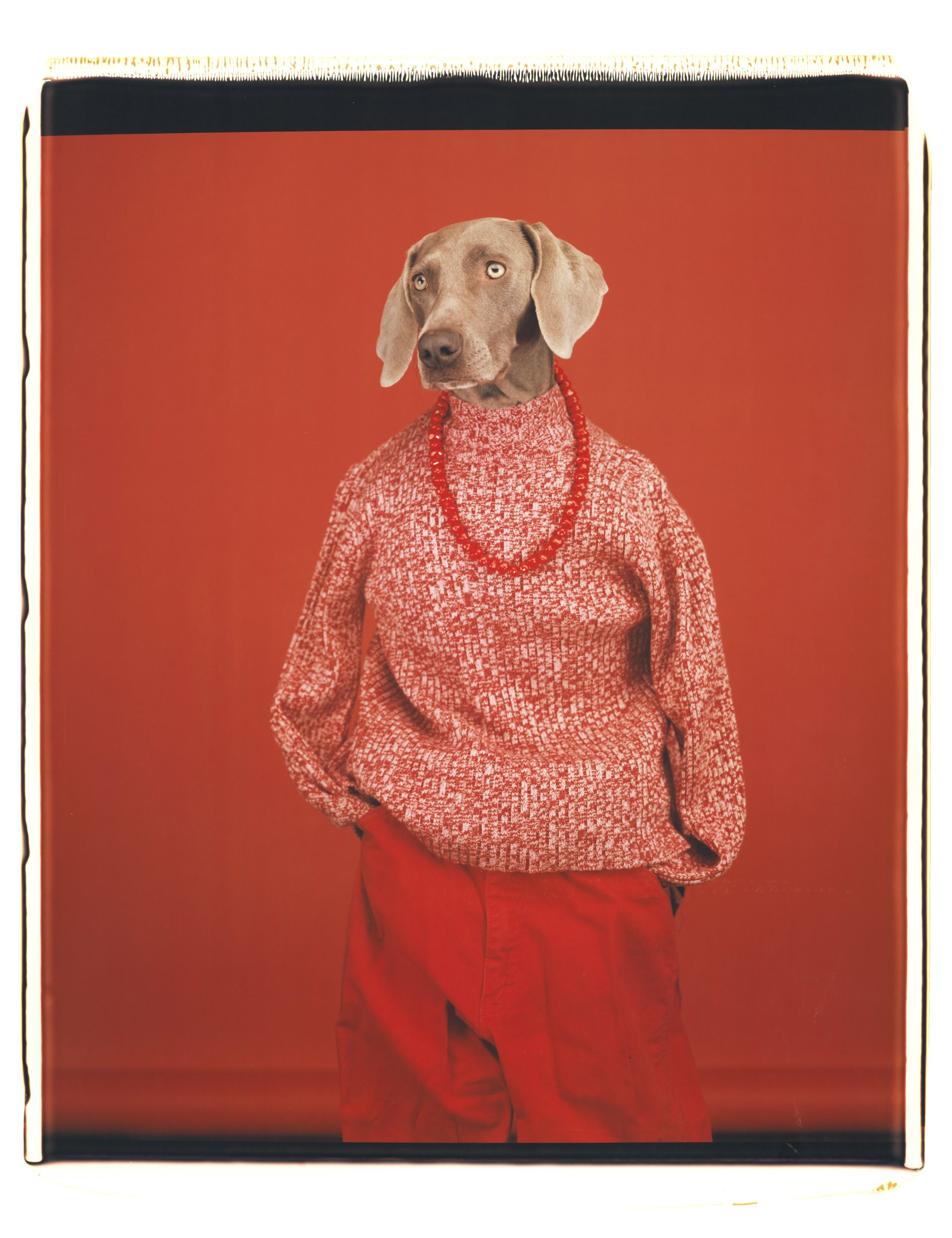 William Wegman,  Casual , 2002