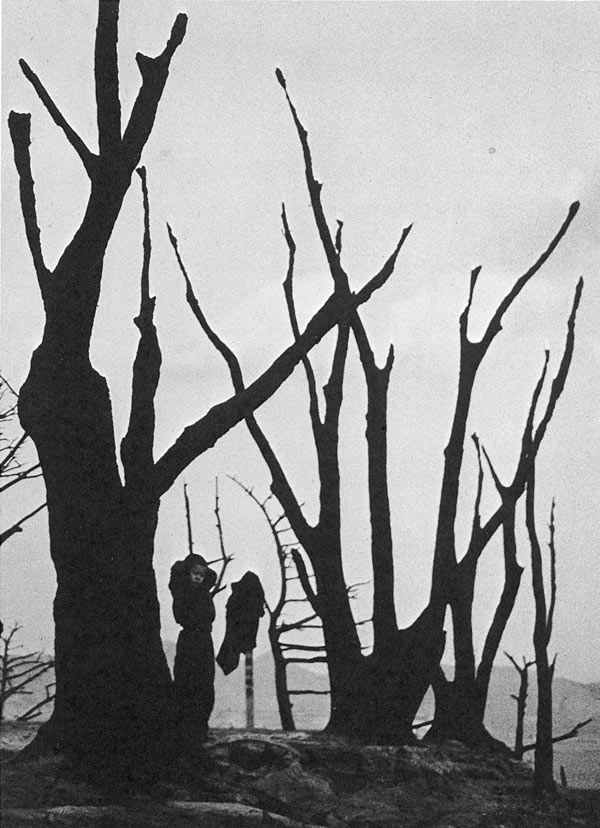 Limb Eung-sik,  Naked Trees (Busan) , 1953. Courtesy of The Museum of Photography, Seoul