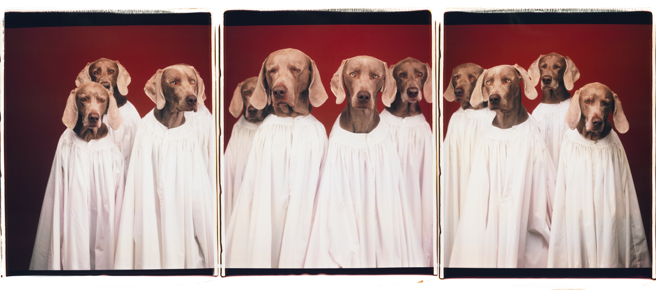 William Wegman.png