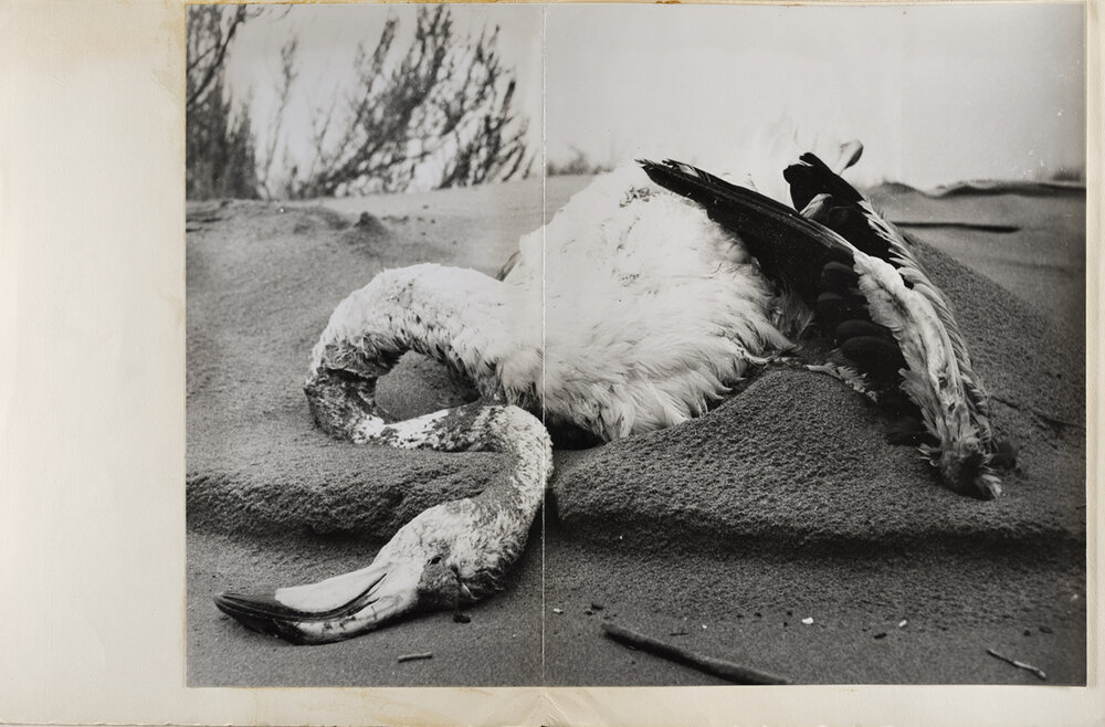 Lucien Clergue,  Dead Flamingo in the Sand, Faraman Lighthouse , 1956. Courtesy of the Atelier Lucien Clergue. Courtesy of the Atelier Lucien Clergue and Saif 2019.