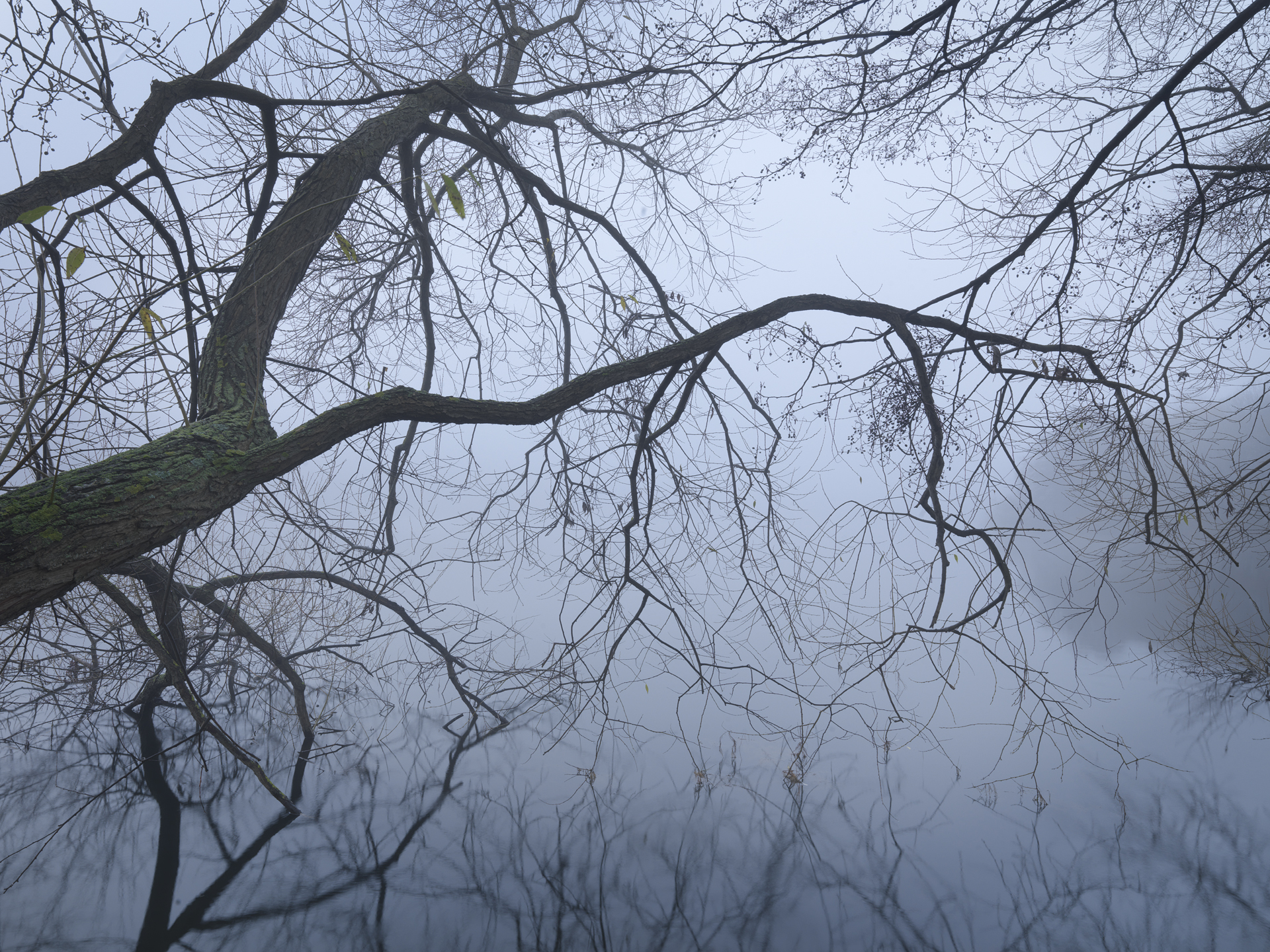 Willow in Mist, Hägersten, Sweden 2014