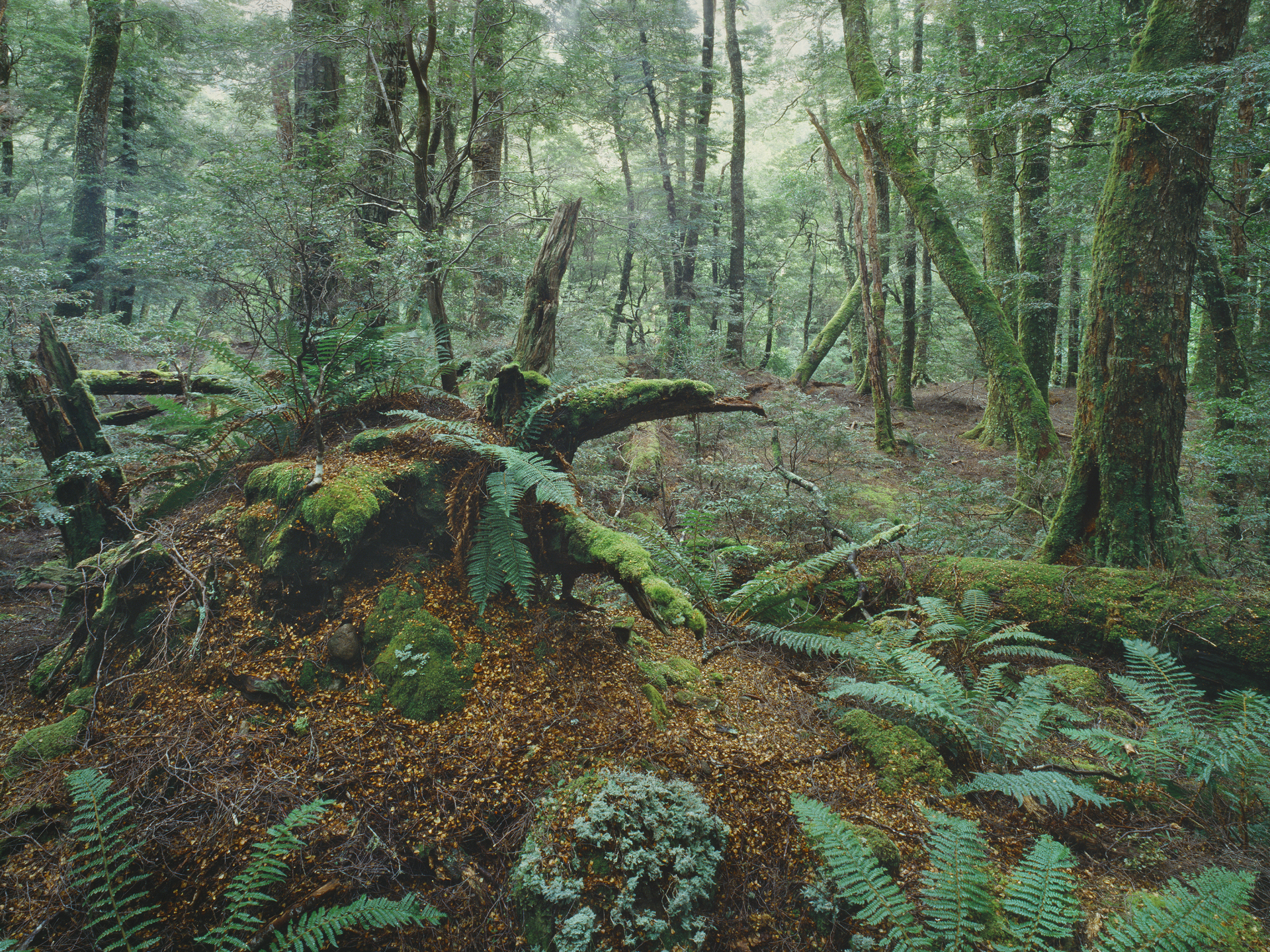 Little Fisher River, Tasmania, Australia 1996