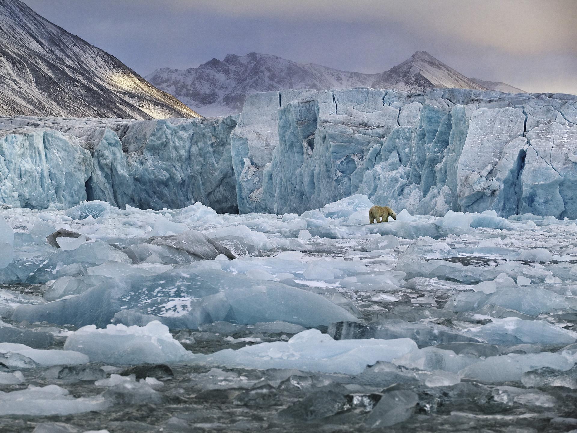 Polar Bear and Monaco Glacier, Svalbard 2004