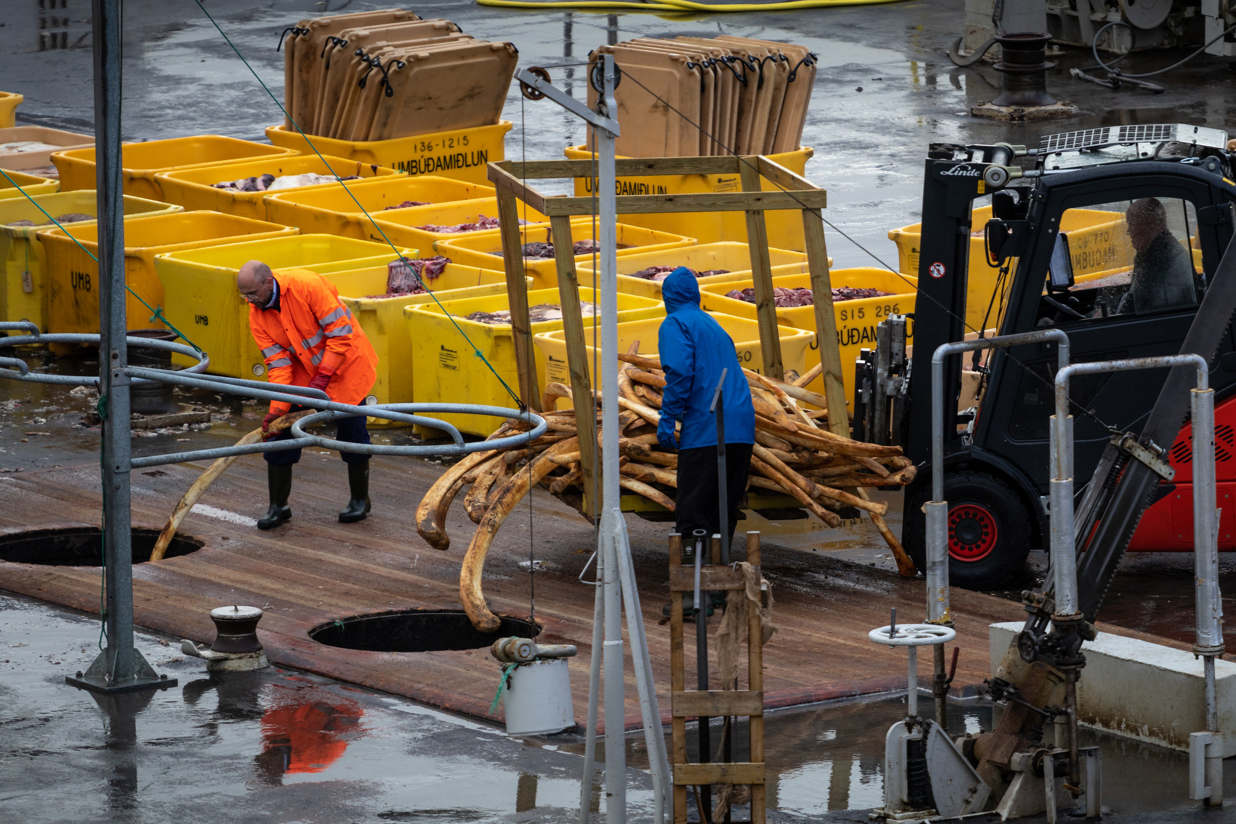 The whale ribs are discarded into the holes, a forklift required to lift them all
