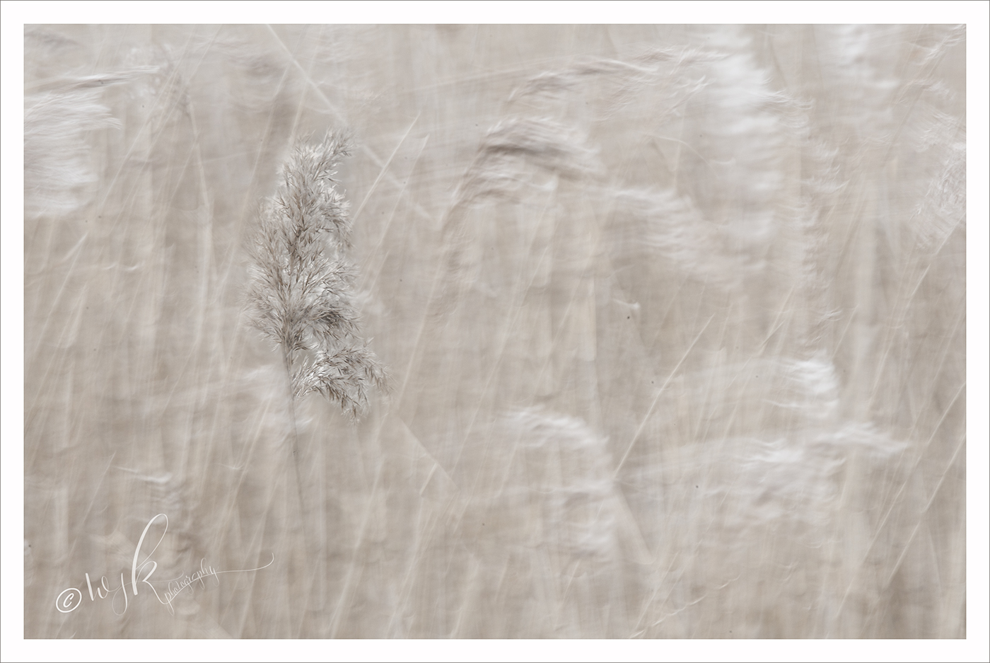 Multiple exposure in camera created a soft feel to the reeds at Dungeness on the Kent coast, UK.