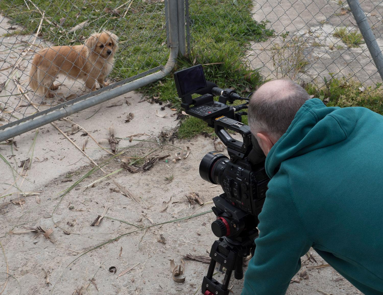 SMALL-DOG-AT-GATE.jpg