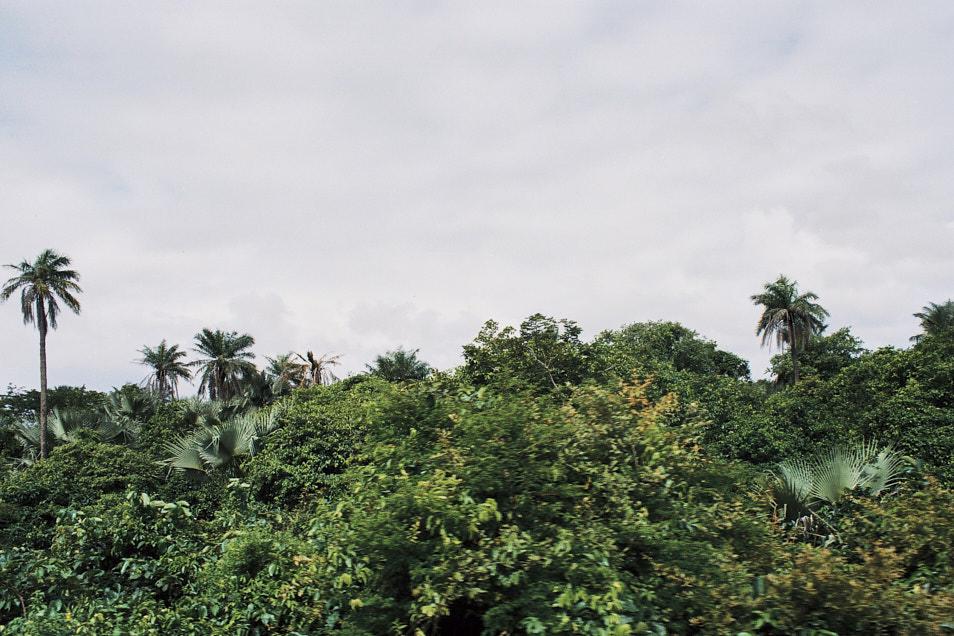 Gambia_Selects_00001.jpg