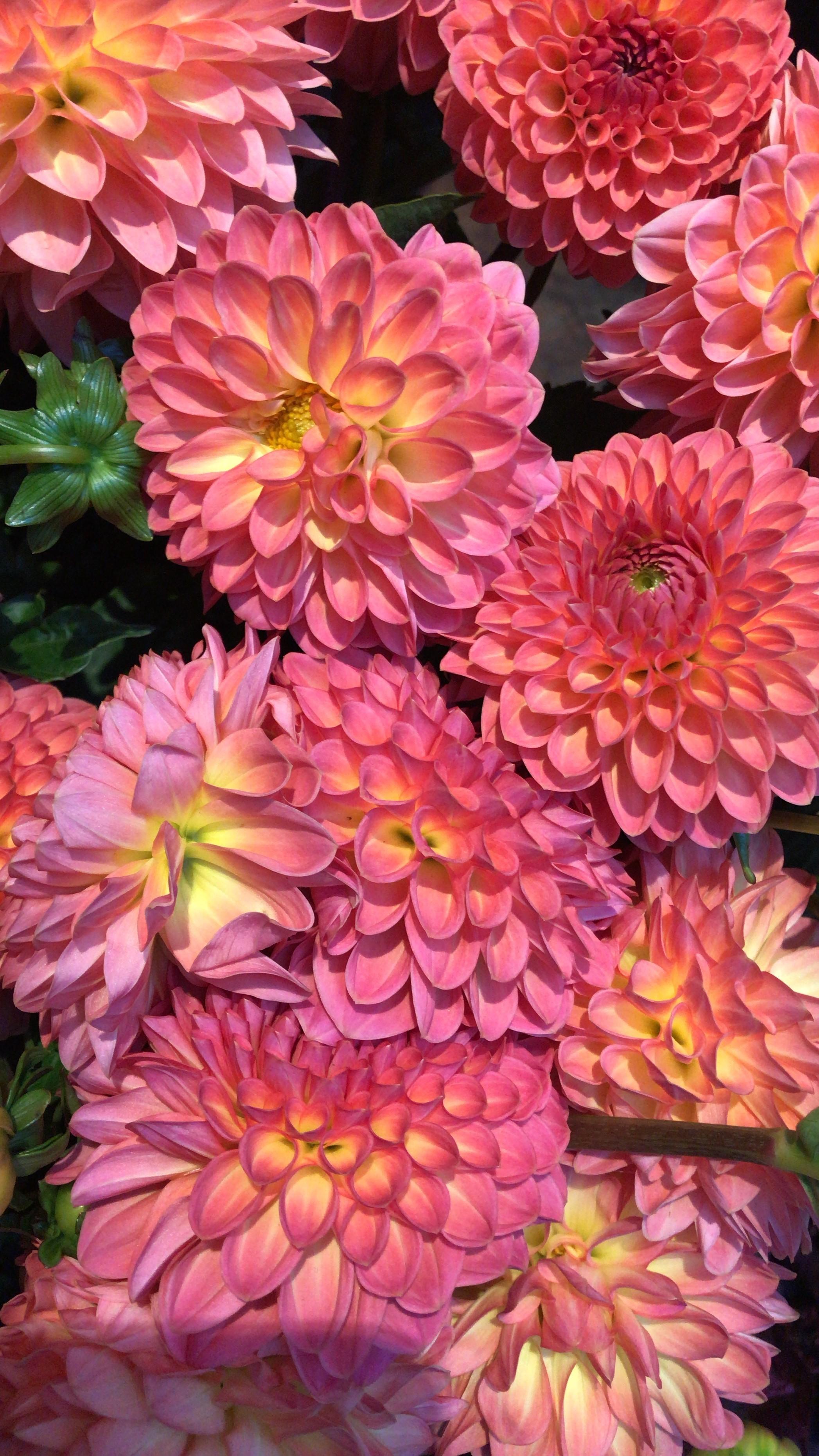 paris-flower-shop-dahlia.jpg