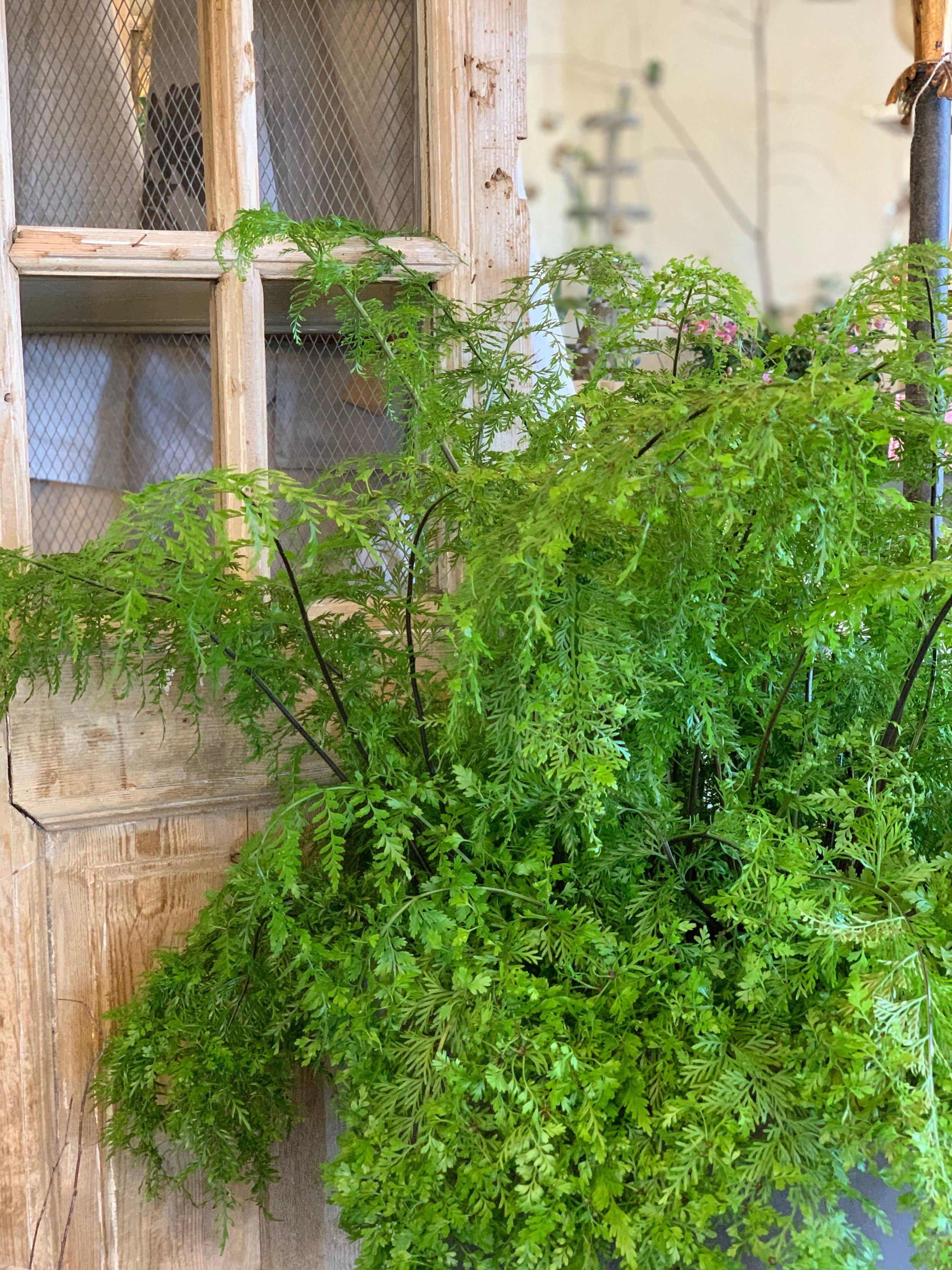 best-indoor-house-plants (4).jpg