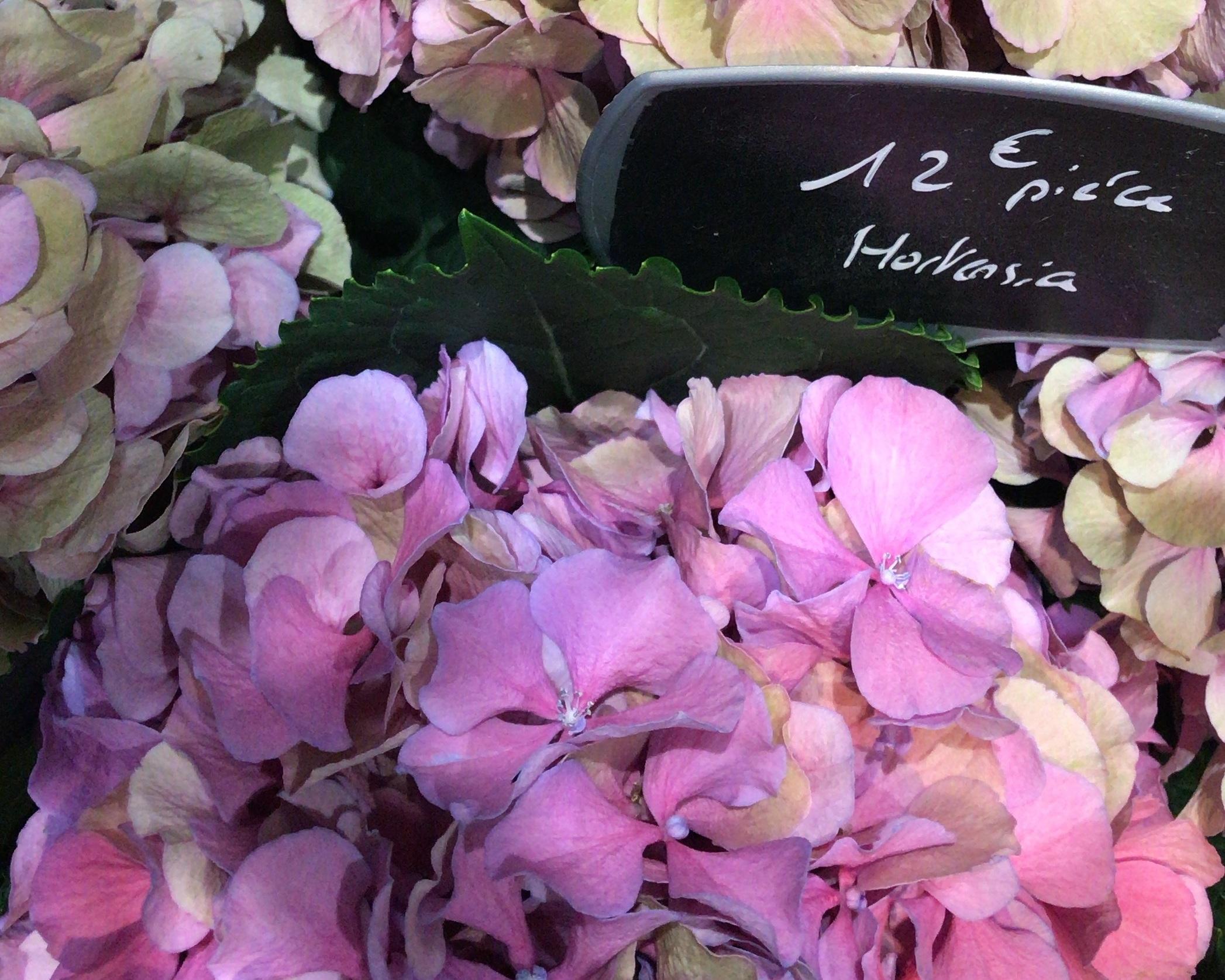 paris-flower-market-hydrangeas.jpg