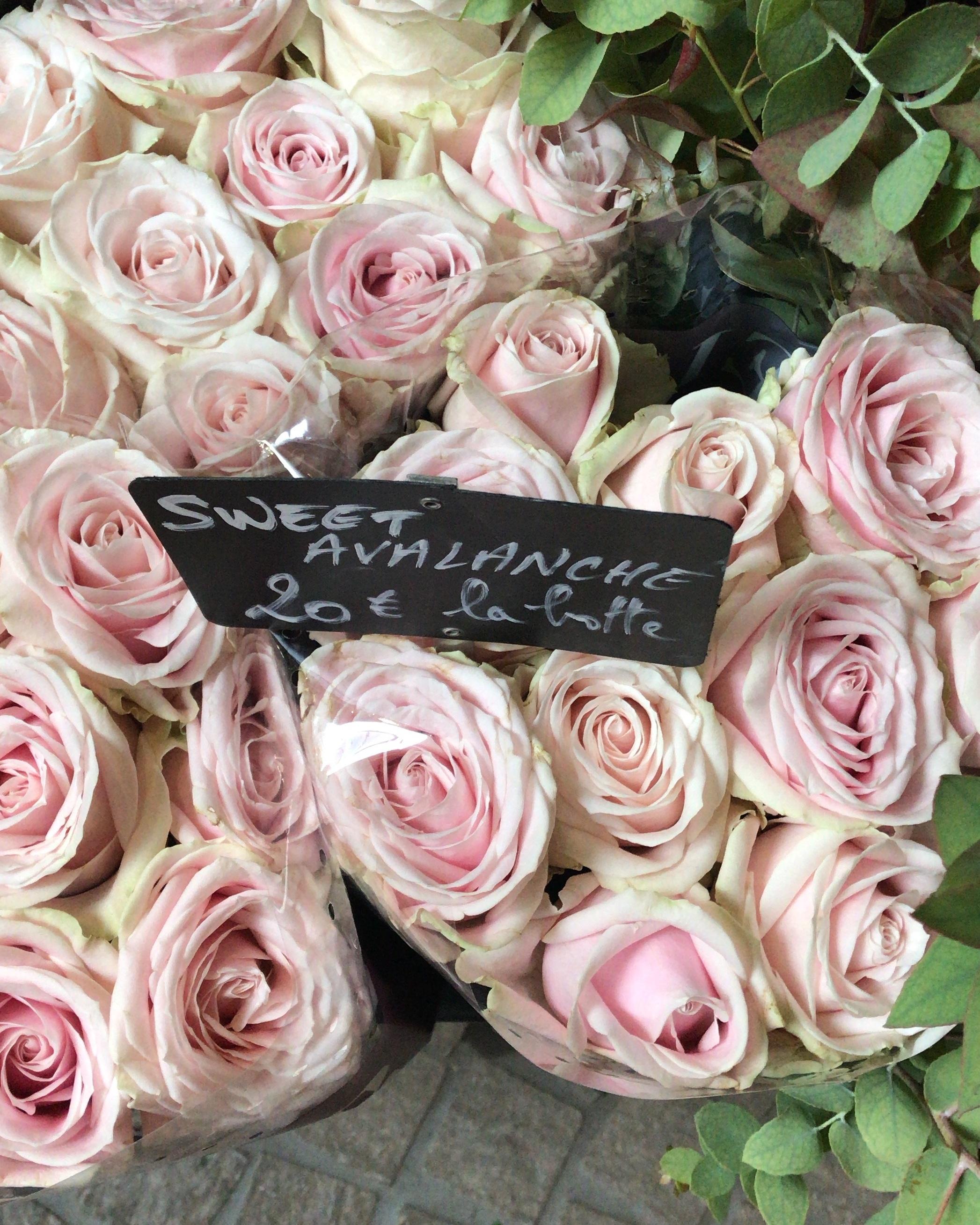 paris-flower-market-pink-roses.jpg