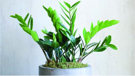 send a - plant