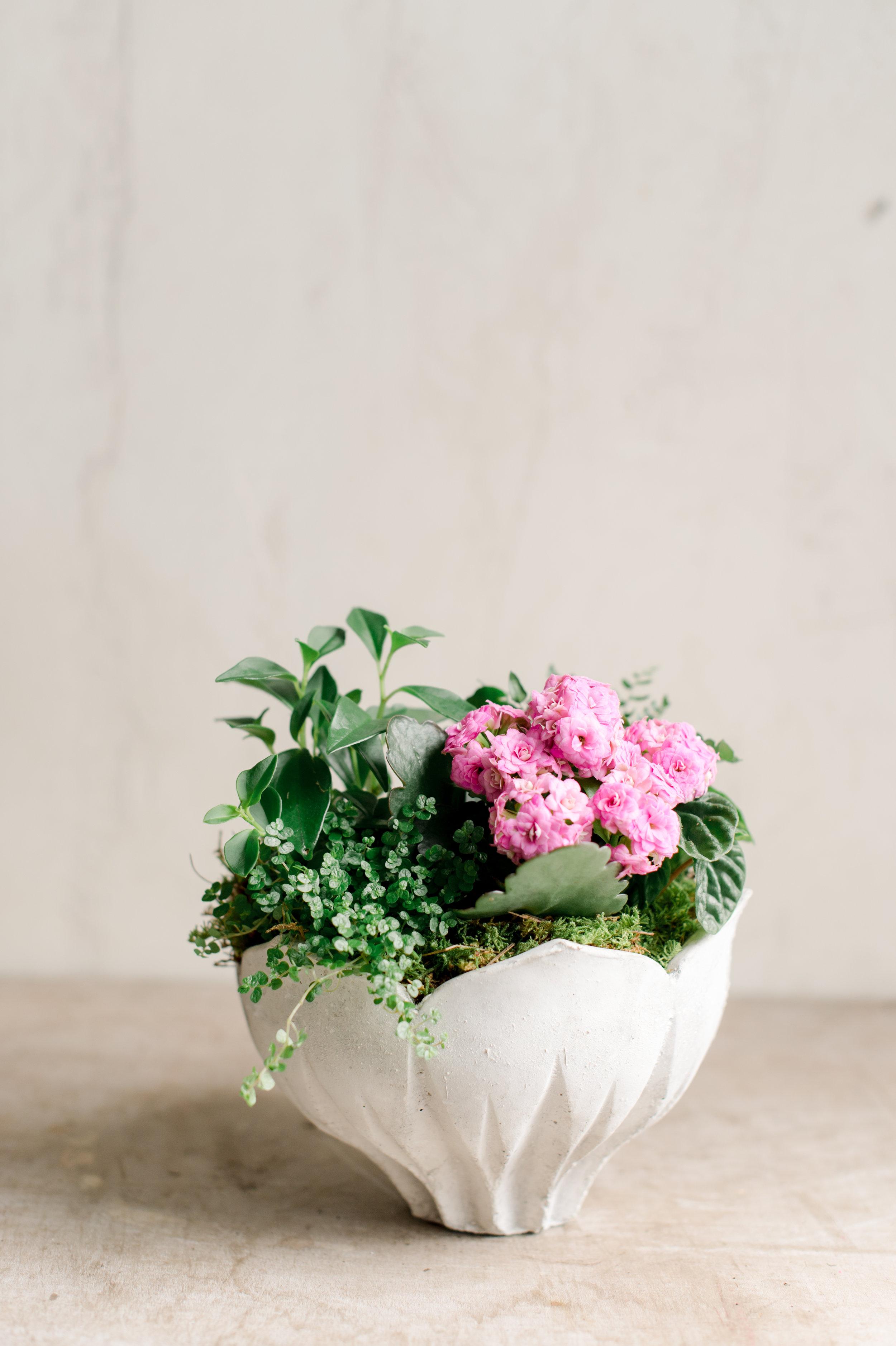 Plante à Fleurs Andover Florist