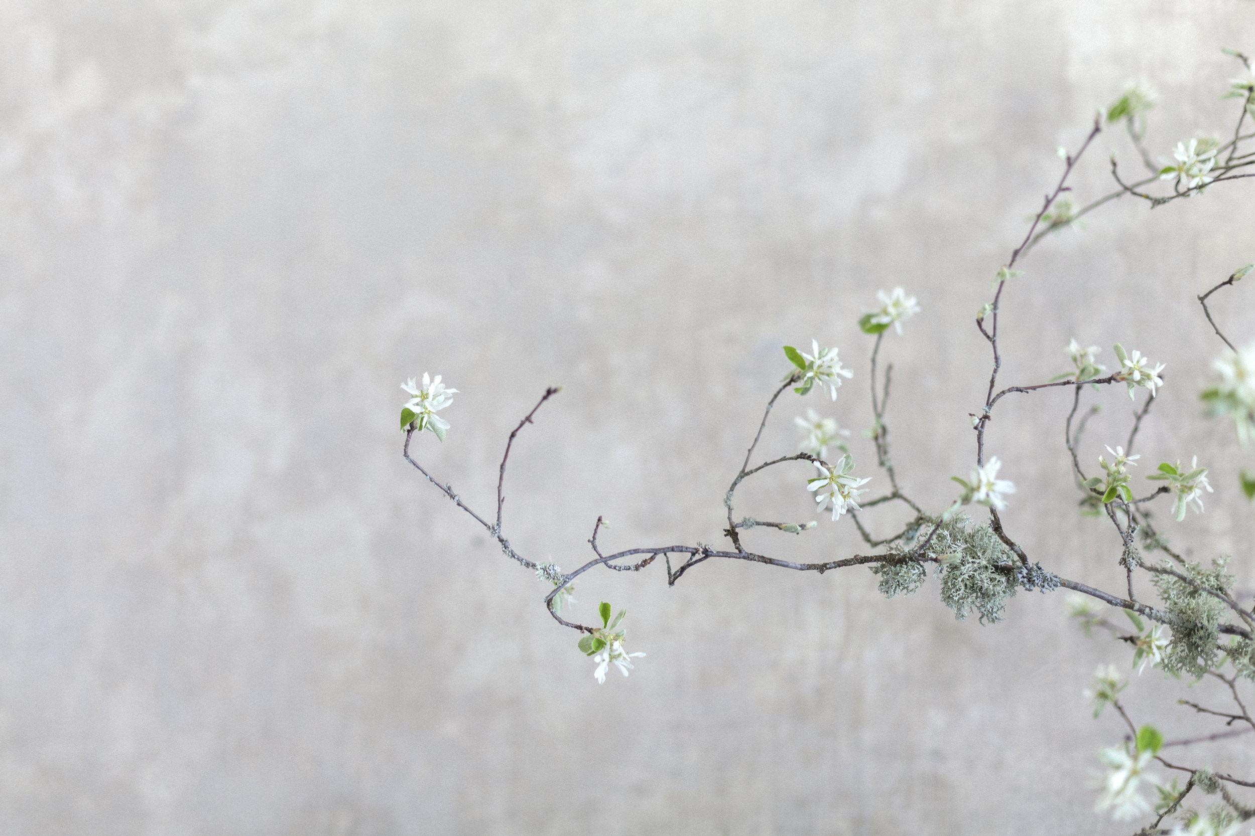 france-provence-floral-workshop-sandra-sigman-lesfleurs.jpg