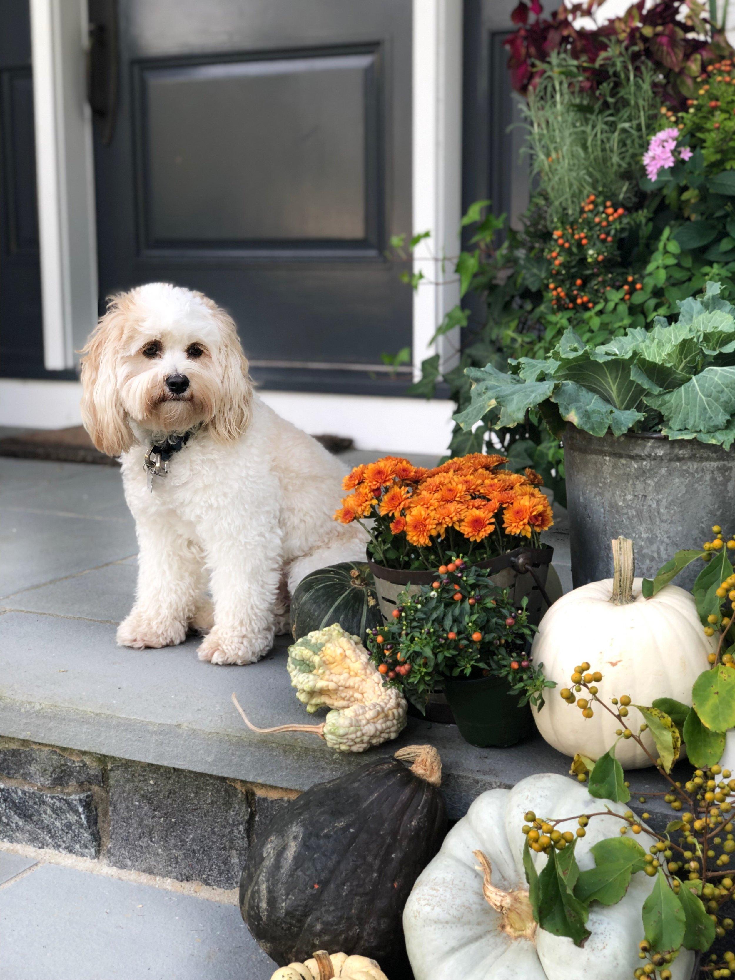 fall-decor-front-porch-dog-steps.jpg