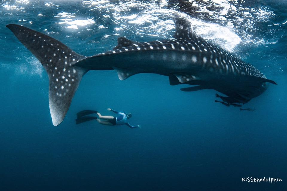 Brinkley Davies with a whale shark, in 2016, on Ningaloo Reef , Western Australia.