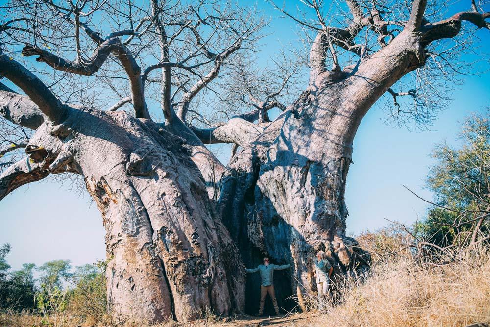 baobab0190makuleke17kirstin-2.jpg