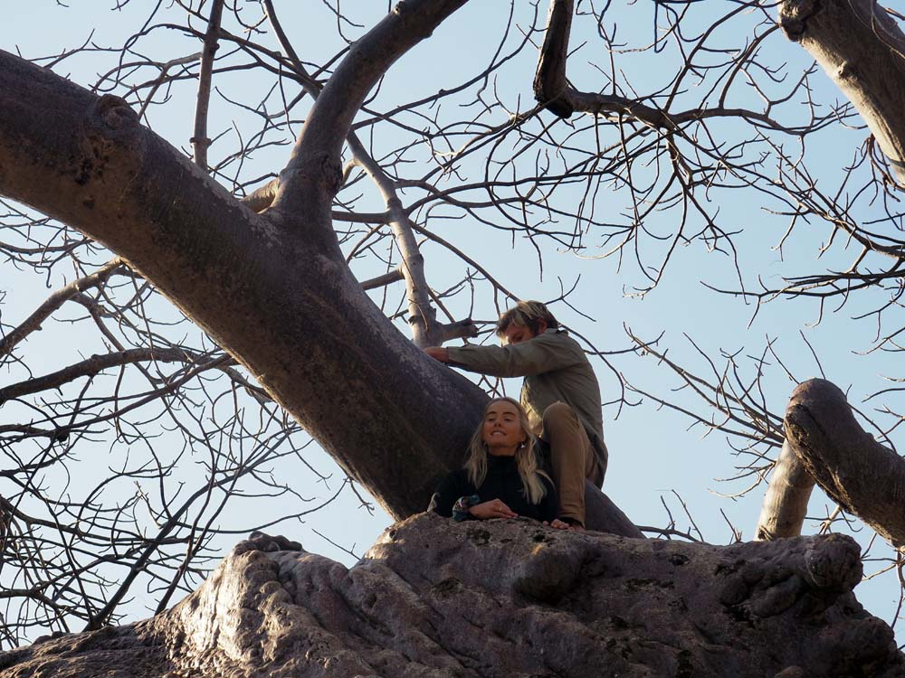 big baobab.jpg