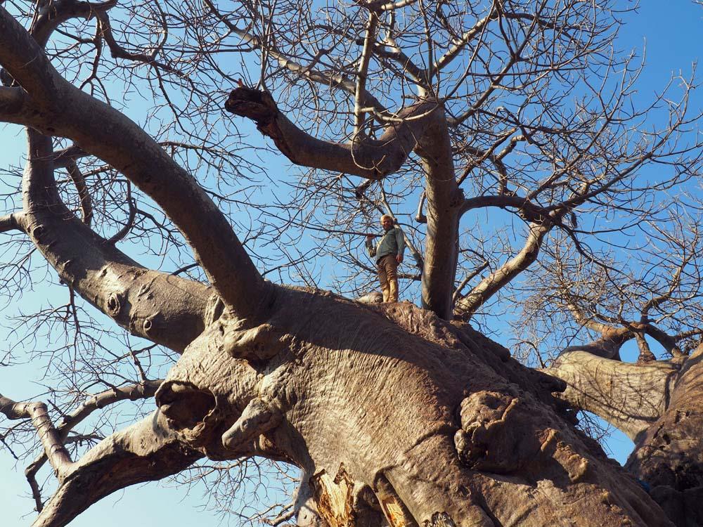 big baobab 2.jpg