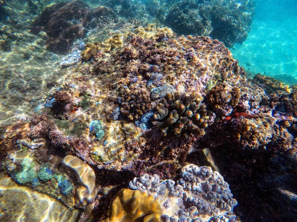 pretty coral s-2.jpg
