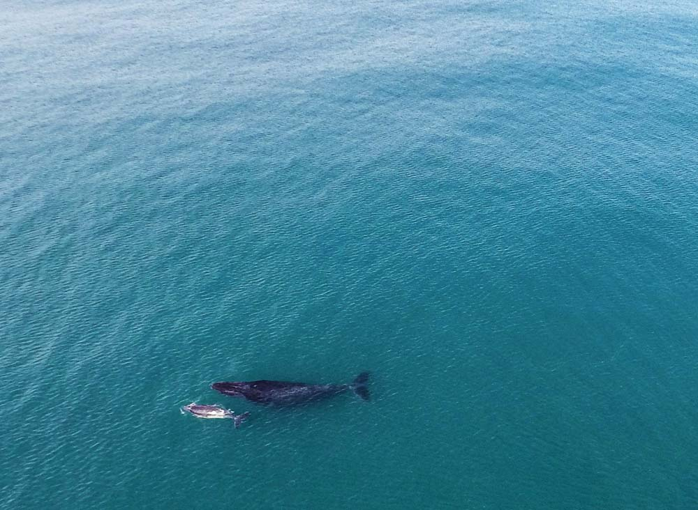 whale-2.jpg