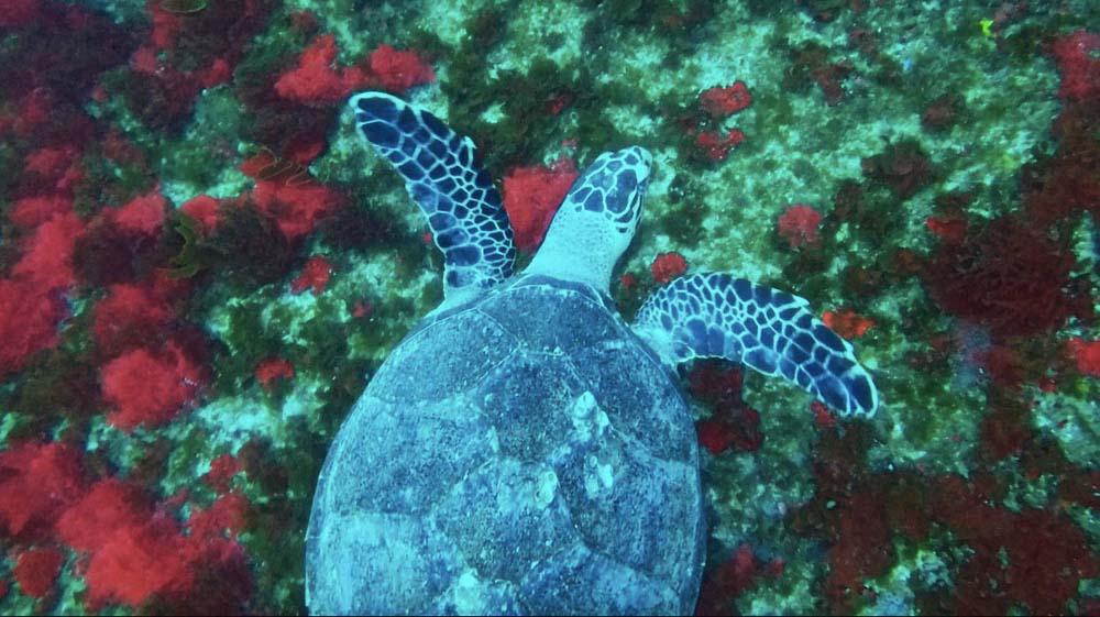 mr turtle-2.jpg