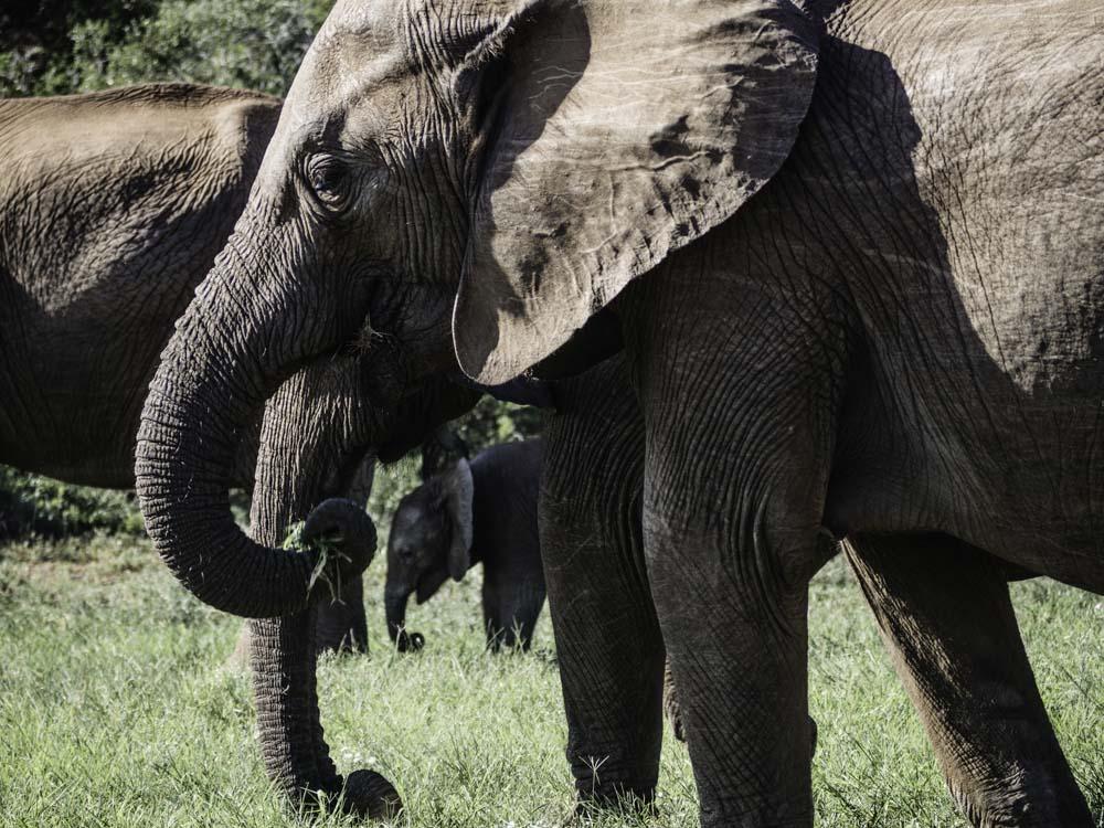 South Africa Blog_ Elephants.jpg