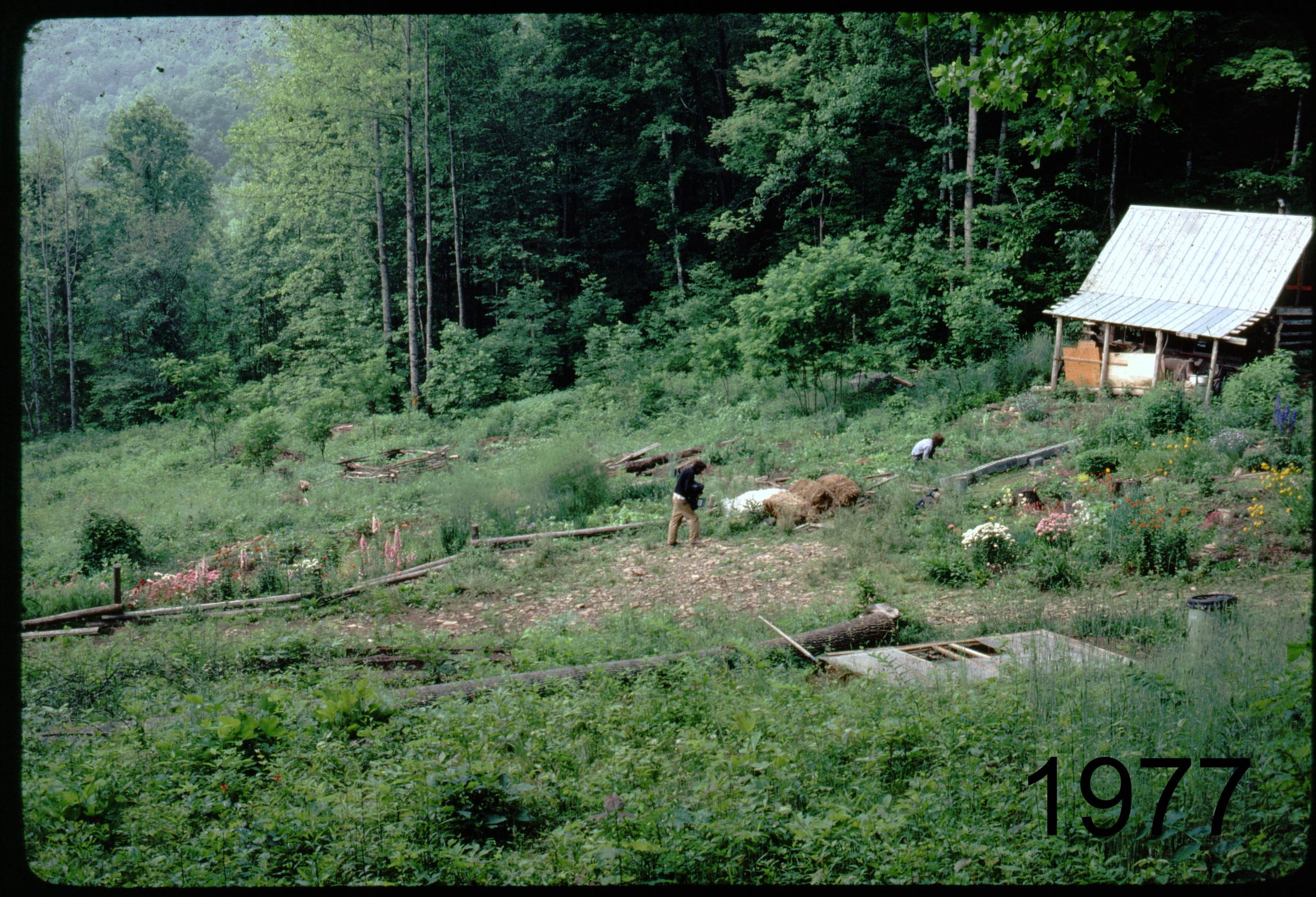 1975 (pavil) - veggdn.jpg