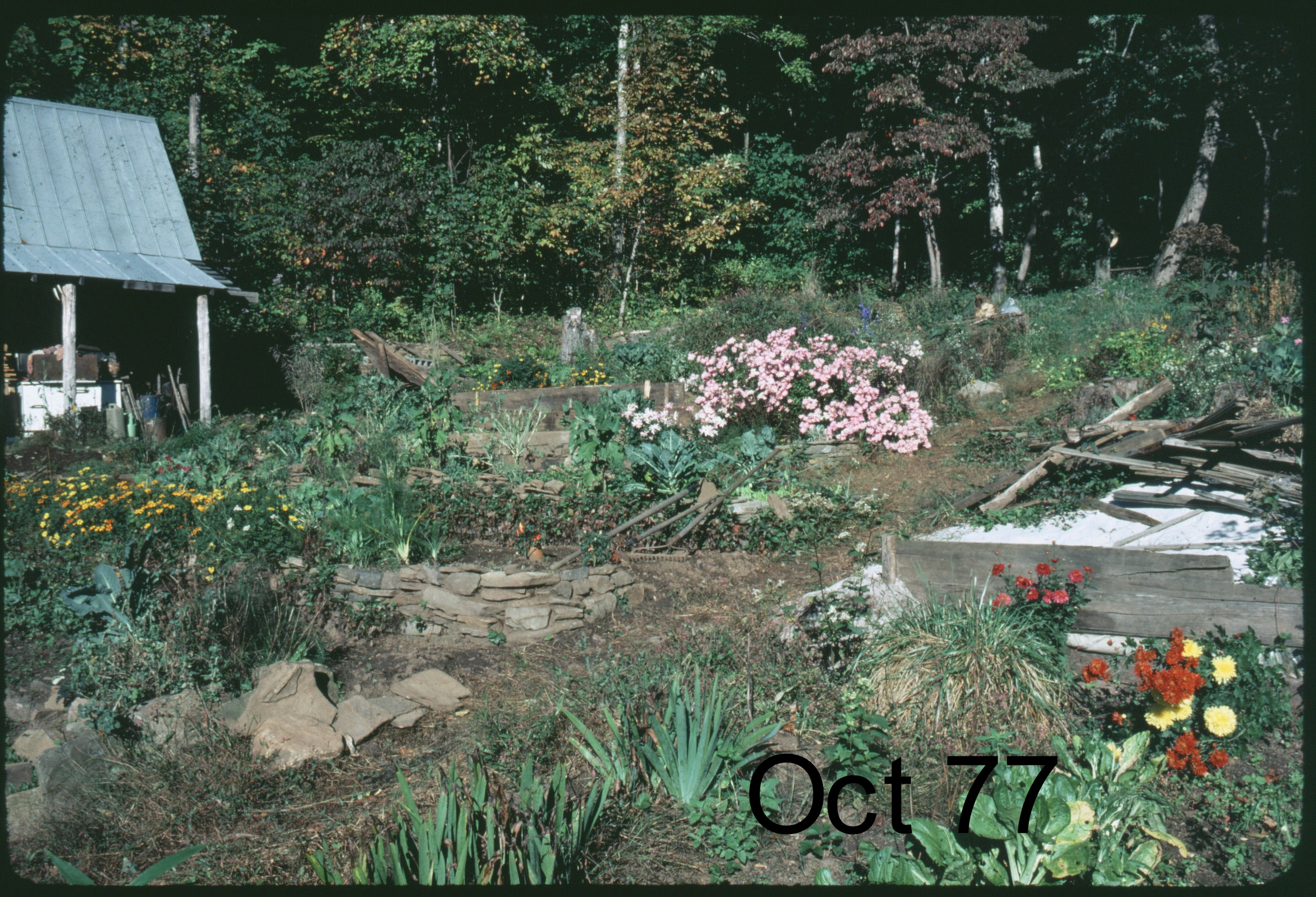 1975cabin-(shed).jpg