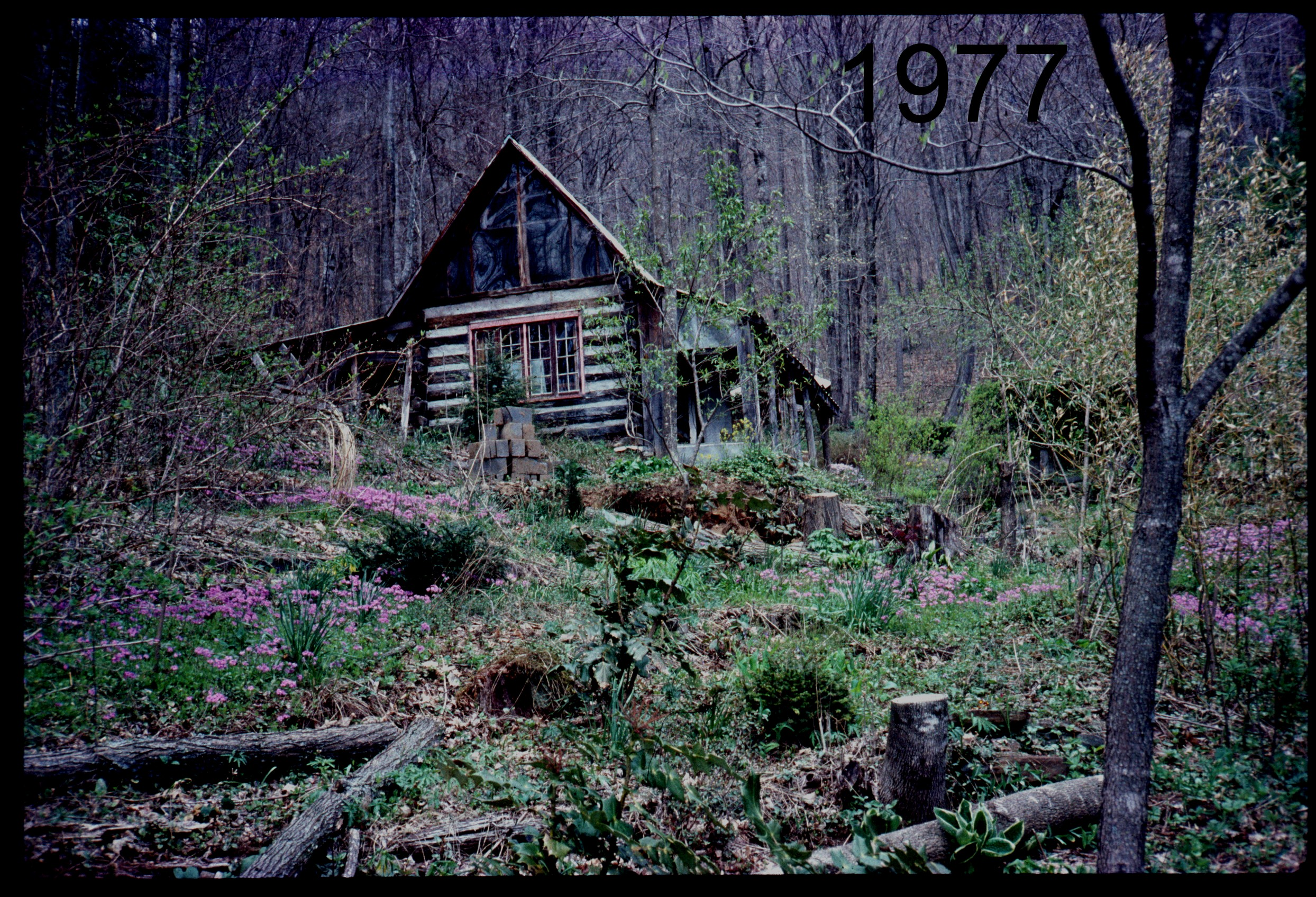 1976 view up to cabin.jpg