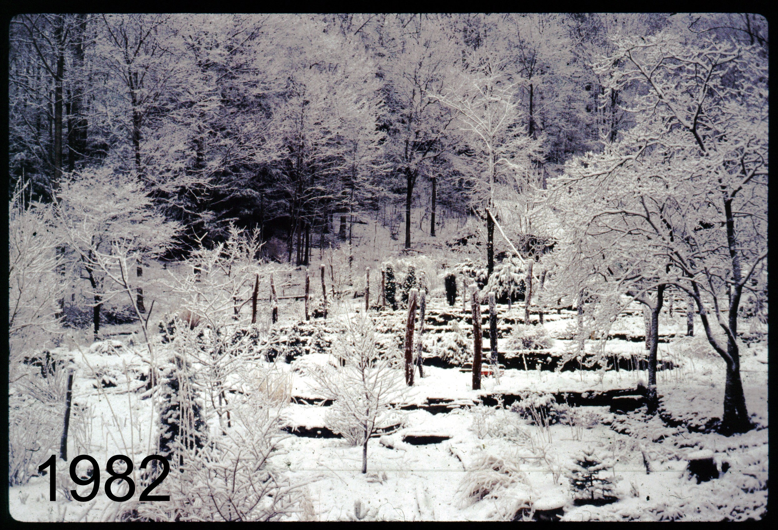 1982 snow view up gdn.jpg