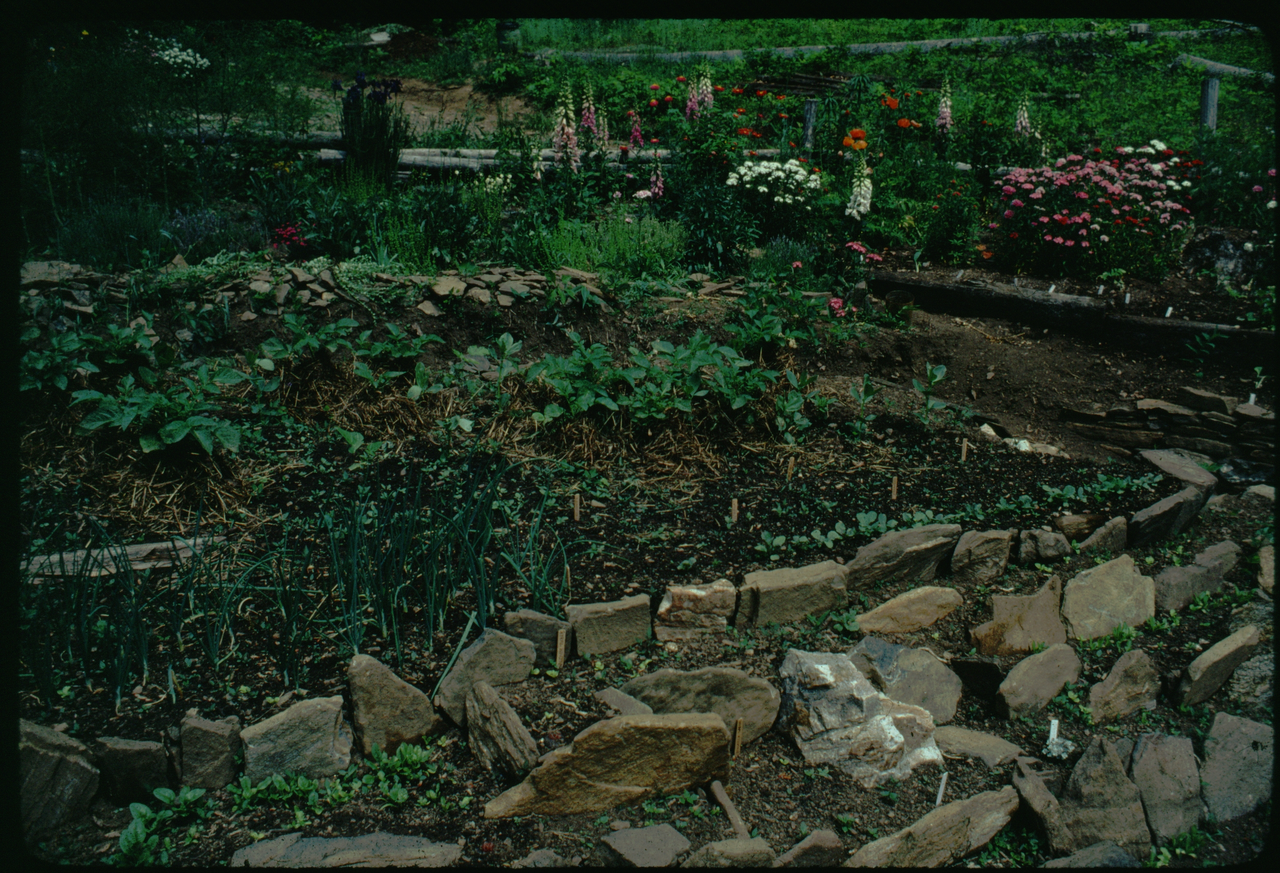 1977 rockwall below lawn.JPG