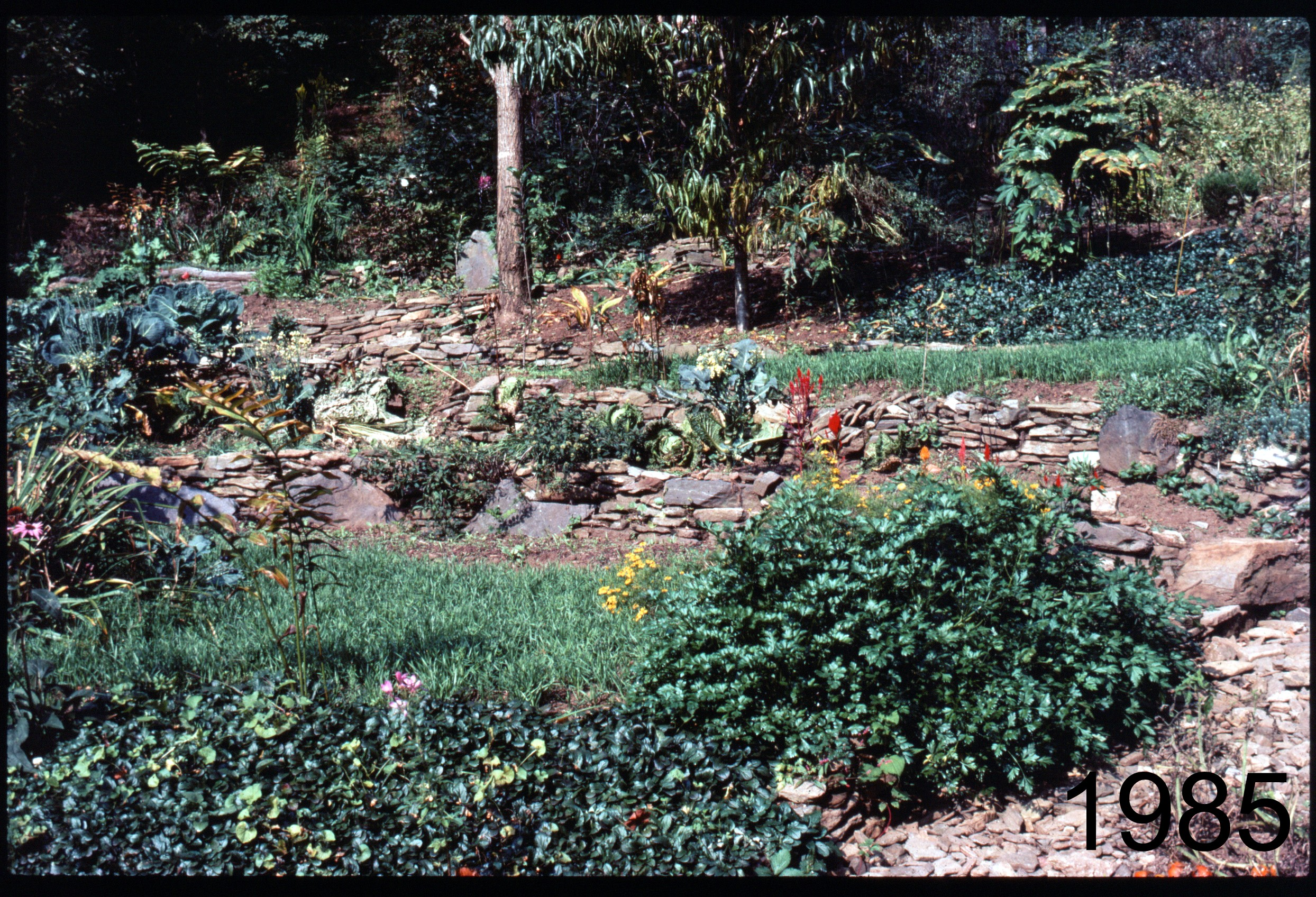 1985 gdn below cherry tree.jpg