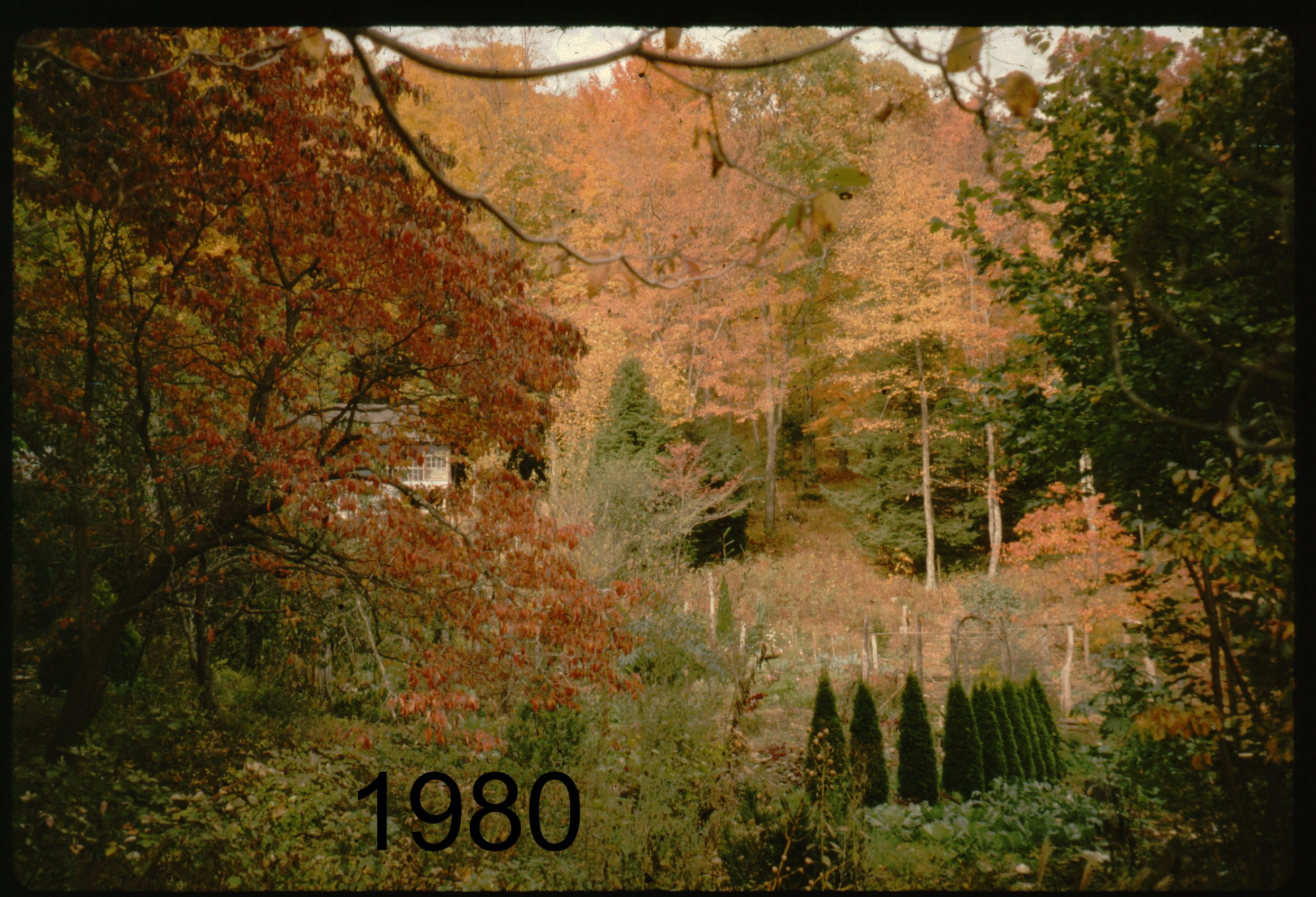 1986x across veggdn to (pavil) autumn.jpg